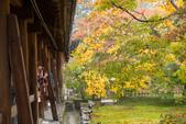20151118_京都賞楓行_第三天-東福寺:DSC_5863.JPG