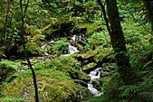 拉拉山巨木群森林浴-20091108:_DSC0228 (Large).JPG