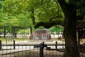 2014_日本京阪神夏日之旅_上集第4-5天:DSC_6735.jpg