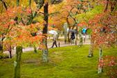 20151118_京都賞楓行_第三天-東福寺:DSC_5904.JPG