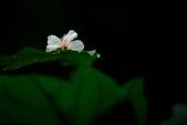 黃昏後的小粗坑_2014.04.25:DSC_1919.jpg