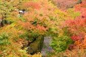 20151118_京都賞楓行_第三天-東福寺:DSC_5952.JPG
