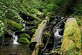 拉拉山巨木群森林浴-20091108:_DSC0232 (Large).JPG
