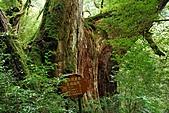 拉拉山巨木群森林浴-20091108:_DSC0245 (Large).JPG