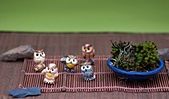 梅峰農場-20120404:梅峰農場-20120404-099 S.JPG