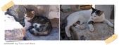 JOURNEY遊亞洲08/2014_土耳其11日遊_Day 8:32_Ephesus Ancient City_22.jpg