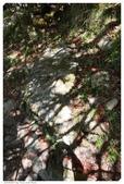JOURNEY遊台灣05/2015_阿里山賓館、玉山:48_玉山_35.JPG