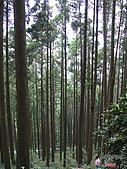 藤枝森林遊樂區:051243