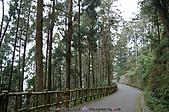再訪藤枝國家森林遊樂區:090124-1 (00).jpg