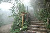 再訪藤枝國家森林遊樂區:090124-1 (01).jpg