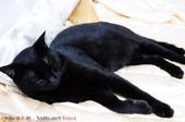 下雨天的愛睏貓:120612 (18).jpg