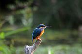 鳥松濕地拍鳥-2:130322 (19).jpg