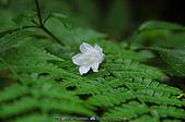 再訪藤枝國家森林遊樂區:090124-1 (03).jpg