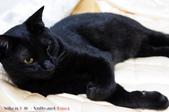 下雨天的愛睏貓:120612 (20).jpg