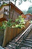 八仙山國家森林遊樂區:080910 (19).jpg