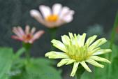 五月Nikon J1隨拍:130505 (14).jpg
