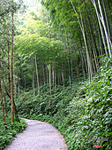藤枝森林遊樂區:051252
