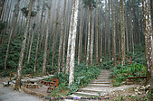 再訪藤枝國家森林遊樂區:090124-1 (07).jpg