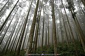 再訪藤枝國家森林遊樂區:090124-1 (08).jpg