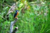 鳥松濕地拍鳥-2:130322 (24).jpg