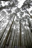 再訪藤枝國家森林遊樂區:090124-1 (09).jpg