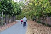 鳳山熱帶園藝試驗分所:130320 (28).JPG