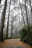 再訪藤枝國家森林遊樂區:090124-1 (10).jpg