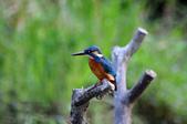 鳥松濕地拍鳥-2:130322 (27).jpg