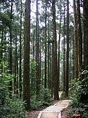 藤枝森林遊樂區:051239
