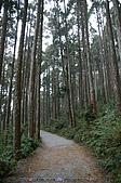 再訪藤枝國家森林遊樂區:090124-1 (11).jpg