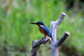 鳥松濕地拍鳥-2:130322 (28).jpg