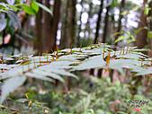 藤枝森林遊樂區:051230