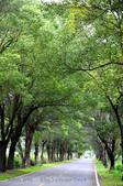武陵綠色隧道:130530-5 (23).jpg