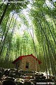 八仙山國家森林遊樂區:080910 (14).jpg