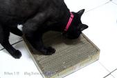 貓抓板快速製作方法:130908 (25).jpg