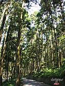 藤枝森林遊樂區:051203