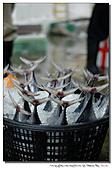 """東港拍魚""""趣"""":101211 (20).jpg"""