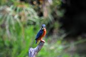 鳥松濕地拍鳥-2:130322 (31).jpg