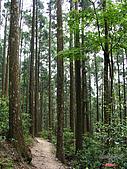 藤枝森林遊樂區:051240