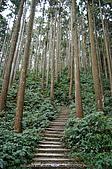 再訪藤枝國家森林遊樂區:090124-1 (15).jpg