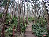藤枝森林遊樂區:051232