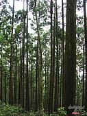 藤枝森林遊樂區:051241