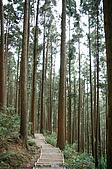 再訪藤枝國家森林遊樂區:090124-1 (16).jpg