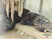 高雄壽山動物園:051301