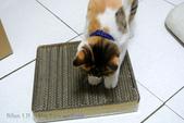 貓抓板快速製作方法:130908 (24).jpg