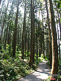 藤枝森林遊樂區:051205