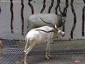高雄壽山動物園:051302