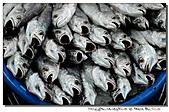 """東港拍魚""""趣"""":101211 (28).jpg"""