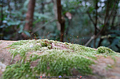再訪藤枝國家森林遊樂區:090124-1 (18).jpg