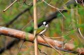 鳥松濕地公園拍鳥:130316-1 (17).jpg